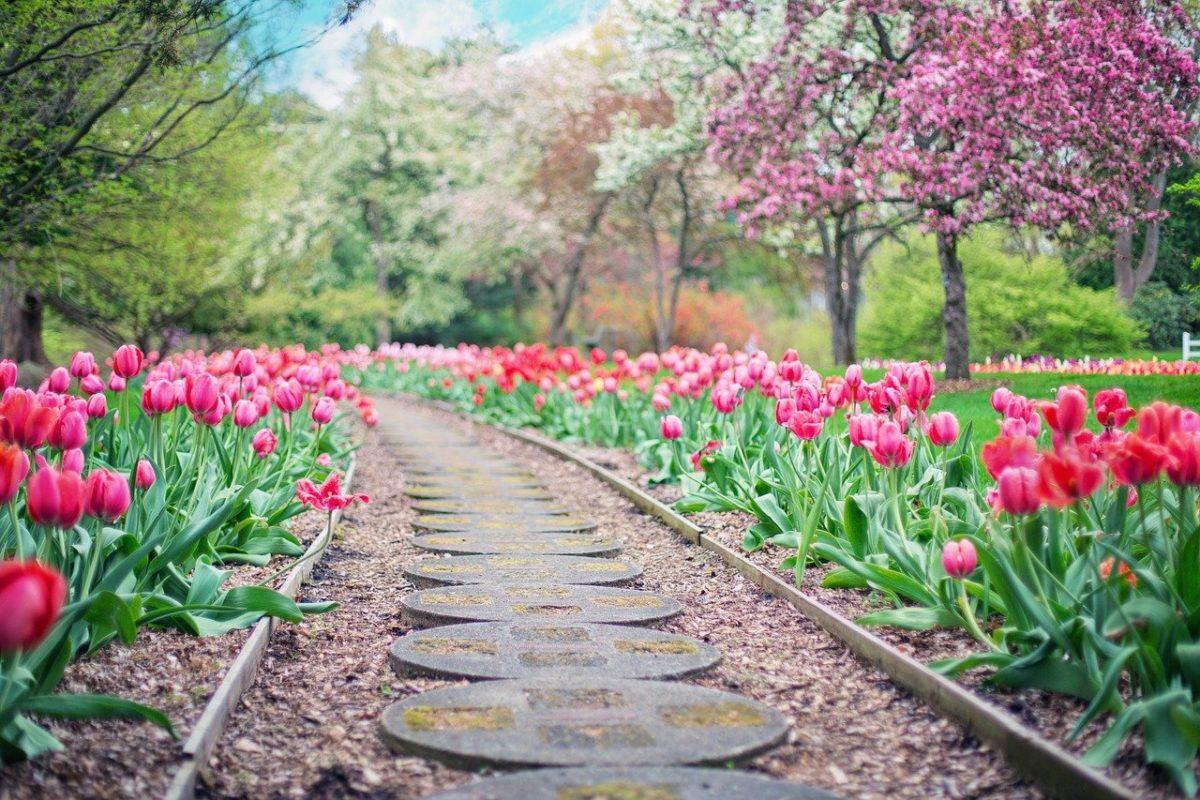 Piękny ,a także uporządkowany ogród to zasługa wielu godzin spędzonych  w jego zaciszu w toku pielegnacji.