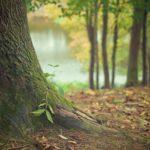 Przepiękny i {miły dla oczu ogród to nie lada wyzwanie, przede wszystkim jak jego pielęgnacją zajmujemy się sami.